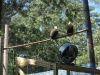 cape_may_zoo_bald_eagl_oct19_202pm