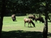 cape_may_zoo_grazers_oct19_202pm