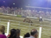 cowtown_rodeo_4_oct19_155pm